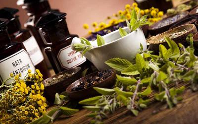 Ricerca di informazioni sul web: trend in aumento per i prodotti naturali